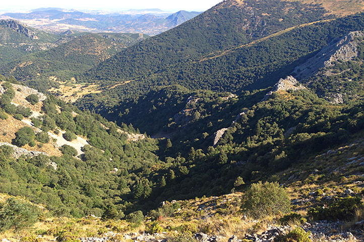 Walk above the fir tree forest: El Pinsapar