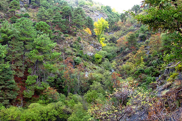 Rio Chico , deep ravines in Alpujarras are rich in nature