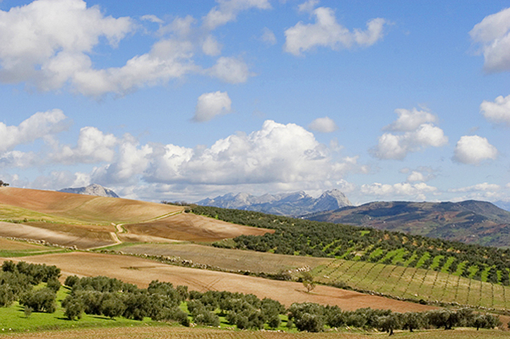 Antequera fields with mountain backdrop in Summer