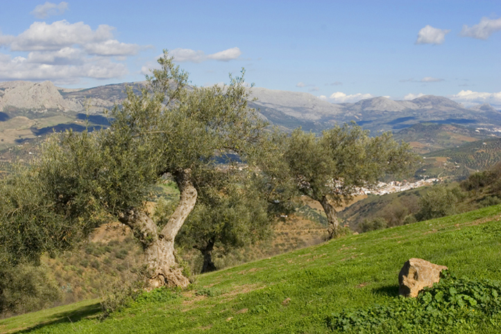 Olive orchards and mountains in May 2013