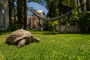 The amazing gardens includes this real turtle