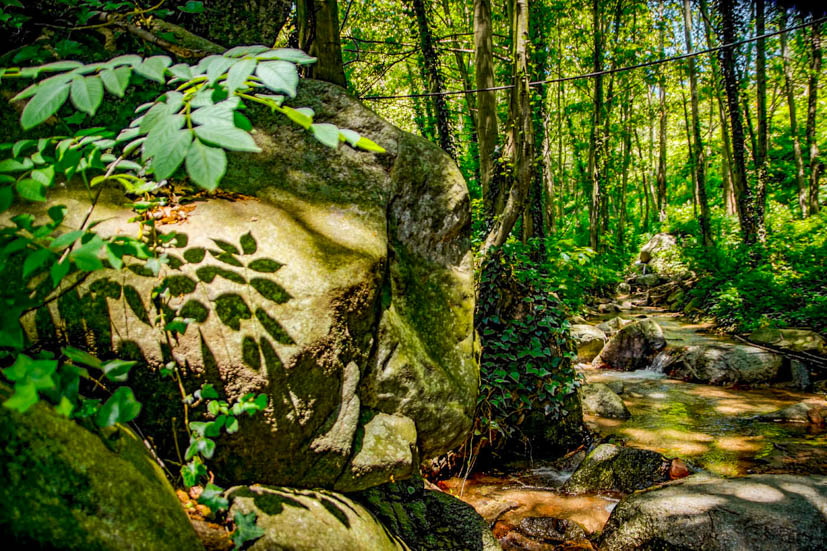 Montseny Natural Park - Water Stream